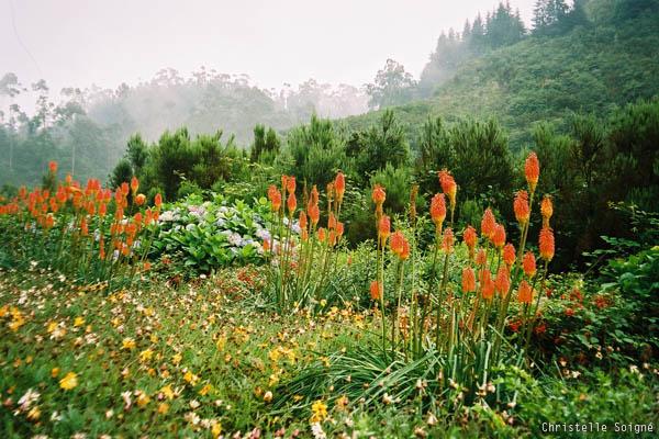 @ Madeira, Portugal