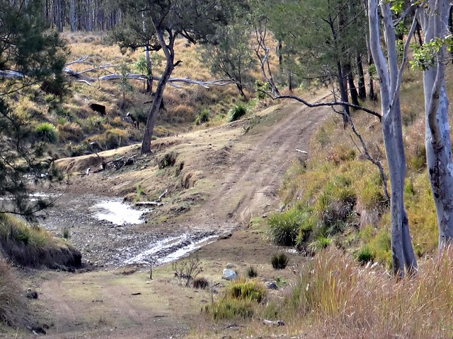 Moonarrumbi Creek