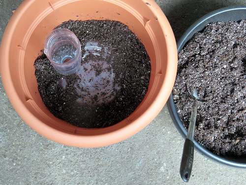 """Partially filled bubble SIP demonstrating the wicking area """"gap"""" filled with potting mix"""