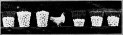"""Image from page 423 of """"Western agriculture"""" (1918)"""