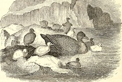 "Image from page 363 of ""Arctic explorations: the second Grinnell expedition in search of Sir John Franklin, 1853, '54, '55"" (1856)"