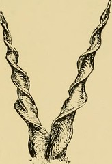 "Image from page 210 of ""Horn measurements and weights of the great game of the world: being a record for the use of sportsmen and naturalists"" (1892)"