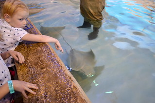 Eisley's 6th Birthday at Downtown Aquarium