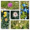Quel mazzolin di fiori 2.0. Ricordo digitale del @PnGranParadiso. [Sì, domani si ricomincia a lavorare...]