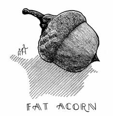 Fat Acorn