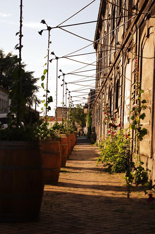 Trottoir verdoyant Quartier Belcier