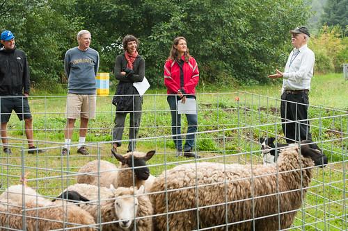 sheep herding lesson at UBC farm