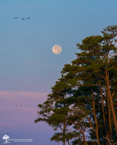 moon birds sunrise virginia nikon assateague chincoteague 80200 d610 virginiaisforlovers supermoon