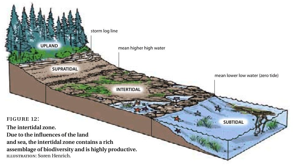 Intertidal Zonation, Source: biodiversitybc.org