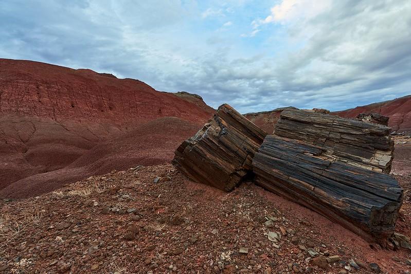 Petrified Logs - Petrified Forest National Park