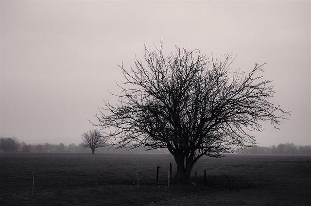Depression/Loneliness