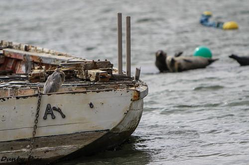 ocean california bay boat marshall seals egret greatblueheron