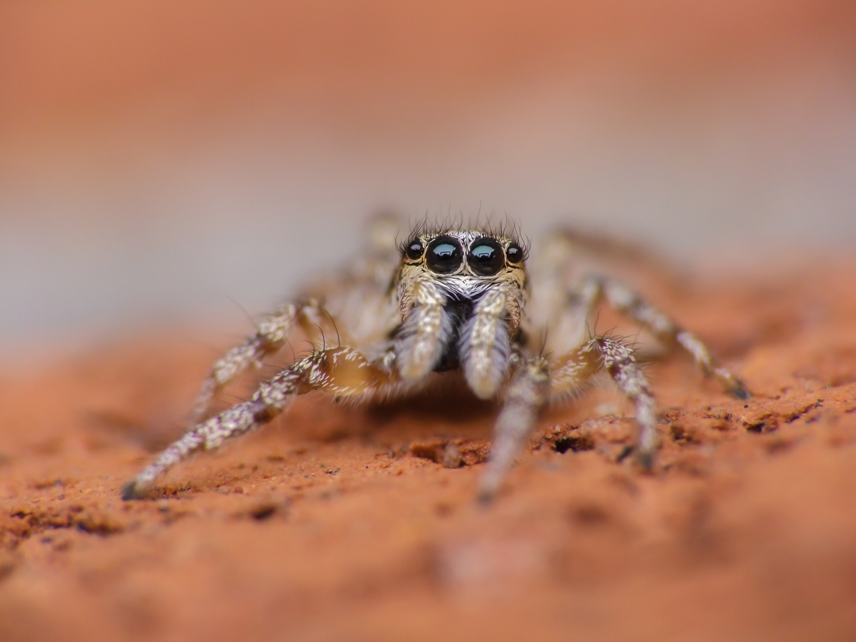 starting out macro photography question: sony alpha / nex e-mount