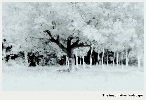 tree nature nara yamato 奈良 大和 佐紀路 olympuspenep3 ealabo theimaginativelandscape fuwaryôsuke