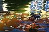 Hundertwasser duck