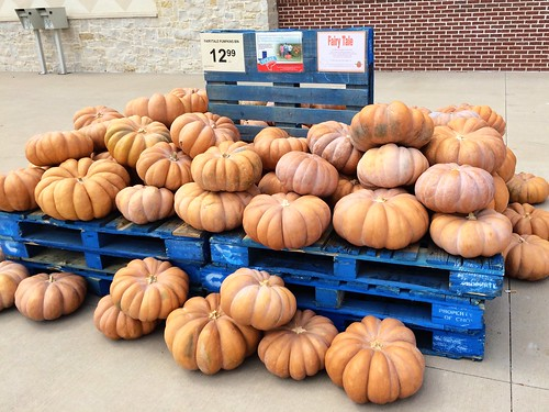 Market Street Pumpkin Patch