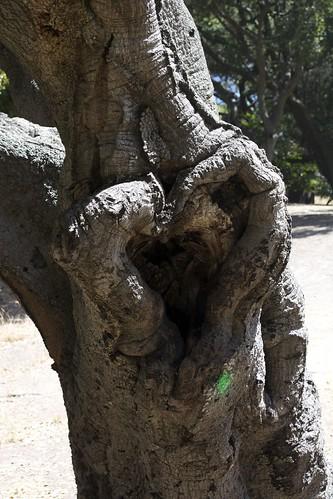 I *heart* this tree ;)
