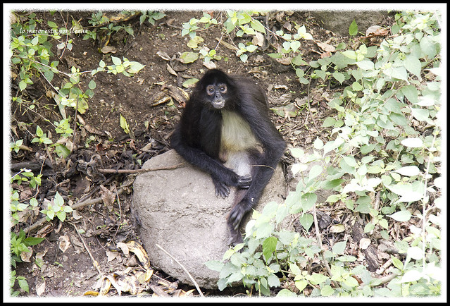 Visita a la Reserva del lago Atitlan en Panajachel