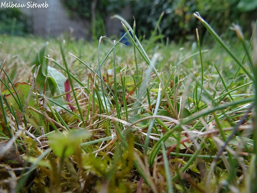 Helwen au jardin