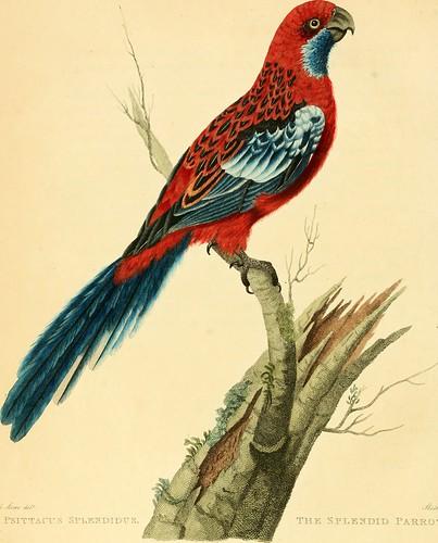 "Image from page 61 of ""Musei Leveriani explicatio, anglica et latina"" (1792)"