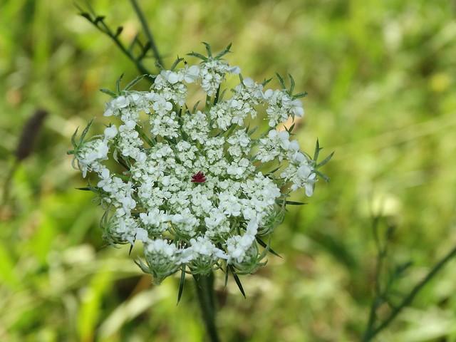 Fehér virág 1