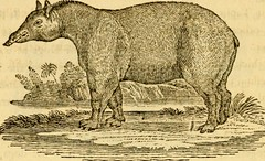 """Image from page 192 of """"A general history of quadrupeds : the figures engraved on wood"""" (1800)"""