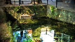 filtr chlorophyll