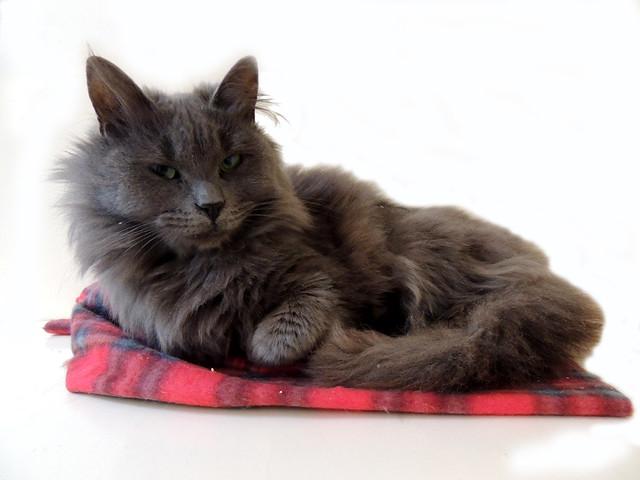 Spca Cat Adoption Hong Kong
