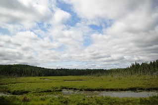 Spruce Bog guided walk - 13