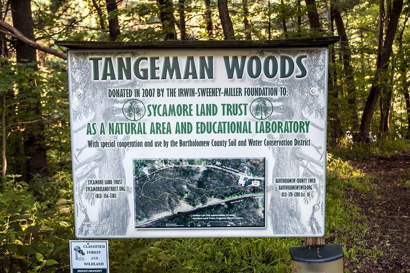 Tangeman Woods