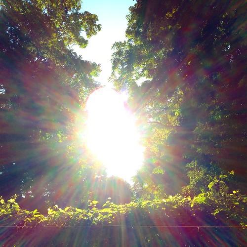 sunset sunrays nofilter kentohio treeview iphonephotography sunsetsofflickr mrhaggenjospleasurepalace july23rd2014