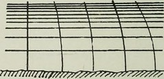 "Image from page 39 of ""Proceedings"" (1913)"