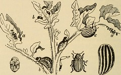 "Image from page 174 of ""Elementary principles of agriculture; a text book for the common schools"" (1915)"
