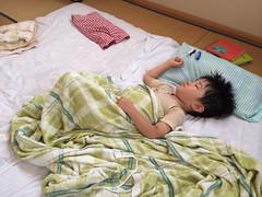 昼寝するとらちゃん 2014/7