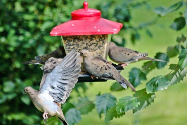 4 on feeder+3