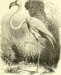 """Image from page 346 of """"Le Jardin des plantes : description"""" (1851)"""
