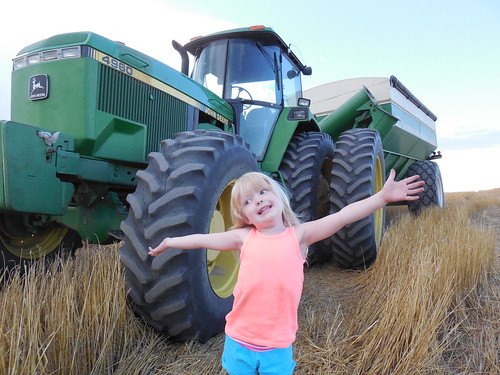 Ava loves harvest