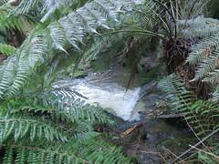 2014-08-10 Lilydale Falls 015 - Second River
