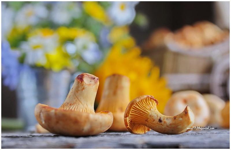 ...chanterelle mushrooms