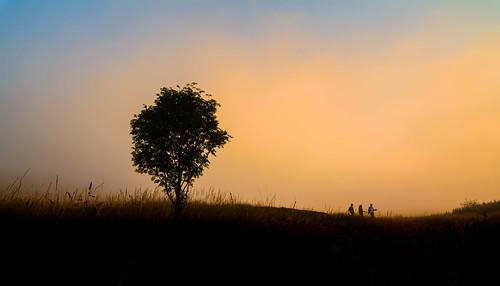 sunset plant tree silhouette fog