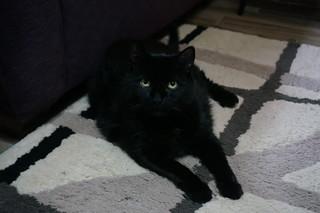 Marcia and Darin's cat, Sadie