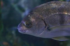 animal, fish, fish, marine biology, fauna, freshwater aquarium, close-up, underwater,