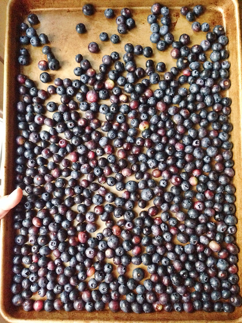Loads of fresh-picked berries!