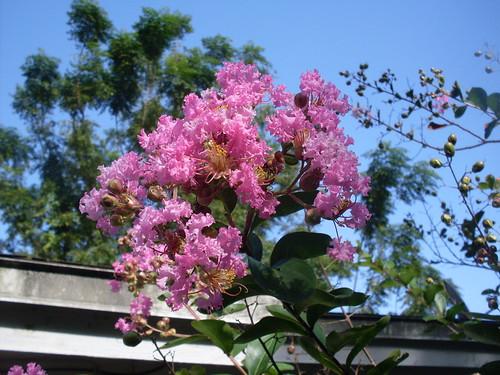 Purple/Pink Flower 3