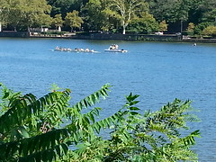 Rowers on the Schuylkill.