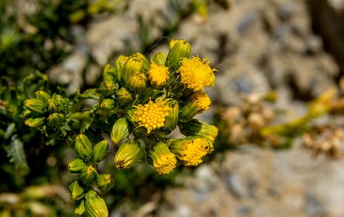 flowers mountain peru yellow sierra