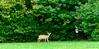 256:365 - 09/23/2014 - Deer