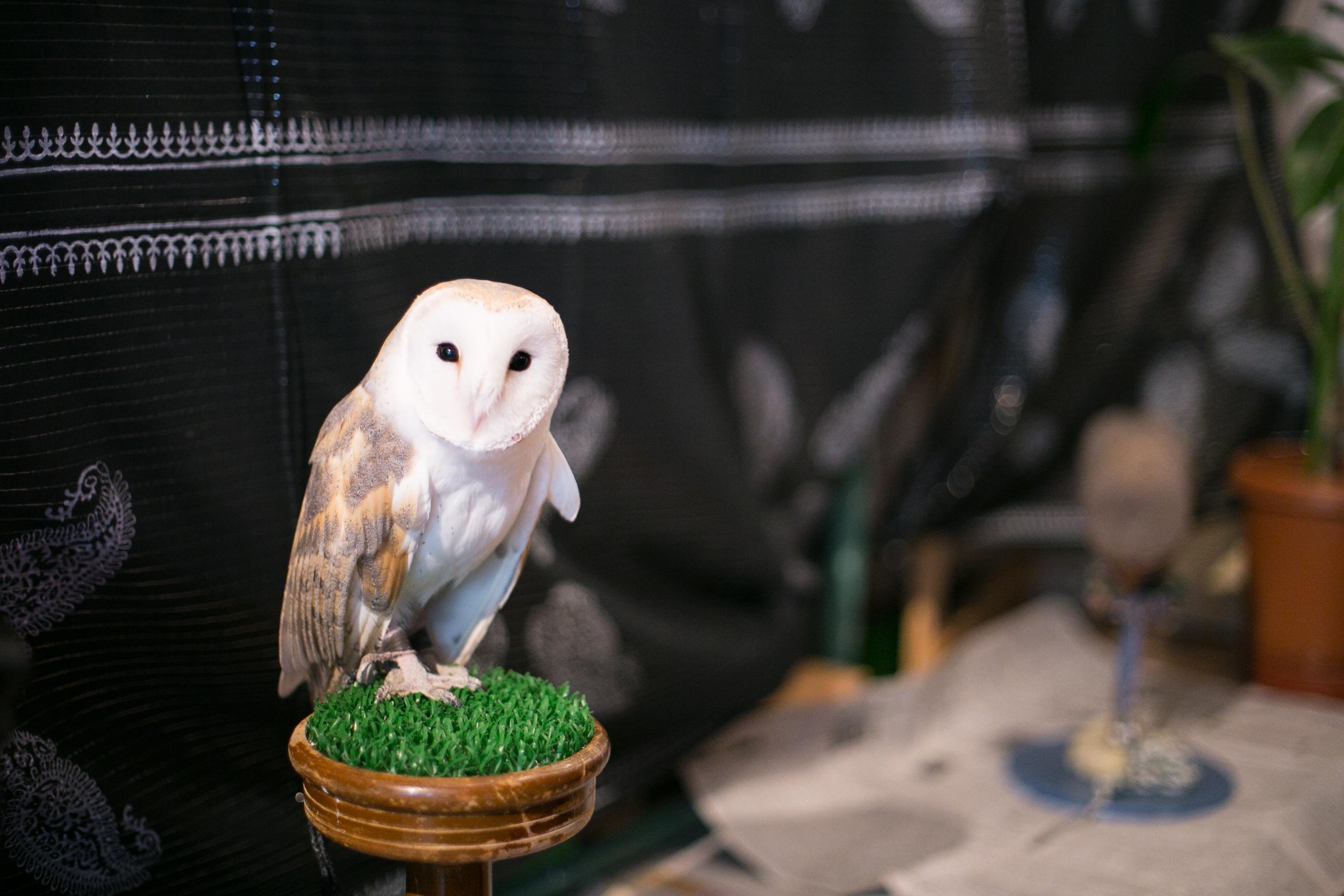 Japan Owl Cafe