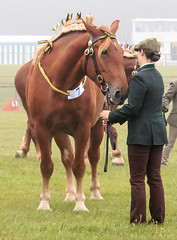 western riding(0.0), horse grooming(0.0), mustang horse(0.0), pasture(0.0), equestrianism(1.0), animal(1.0), mane(1.0), mare(1.0), stallion(1.0), rein(1.0), halter(1.0), bridle(1.0), pack animal(1.0), horse(1.0), horse harness(1.0),