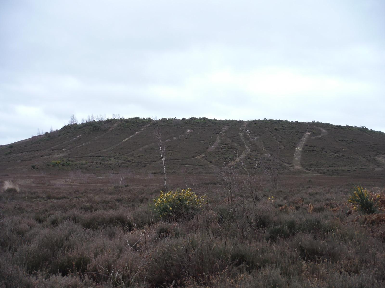 Tracks on Hill, Thursley Common SWC Walk 144 Haslemere to Farnham